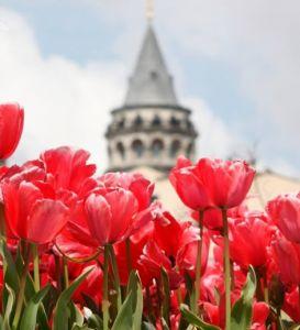 Фестивал на лалето 2020 в Истанбул